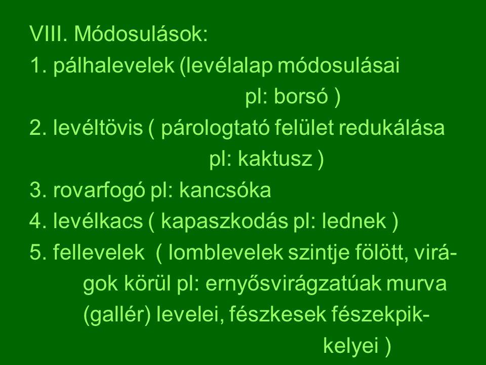 VIII. Módosulások: 1. pálhalevelek (levélalap módosulásai pl: borsó ) 2. levéltövis ( párologtató felület redukálása pl: kaktusz ) 3. rovarfogó pl: ka
