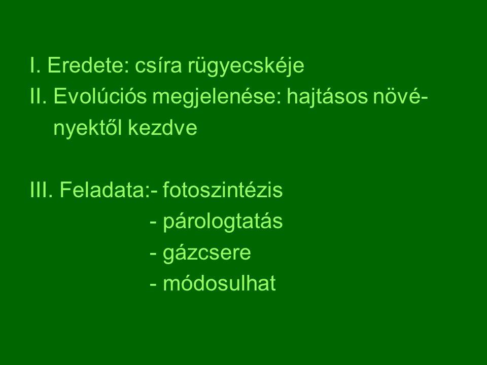 I.Eredete: csíra rügyecskéje II. Evolúciós megjelenése: hajtásos növé- nyektől kezdve III.