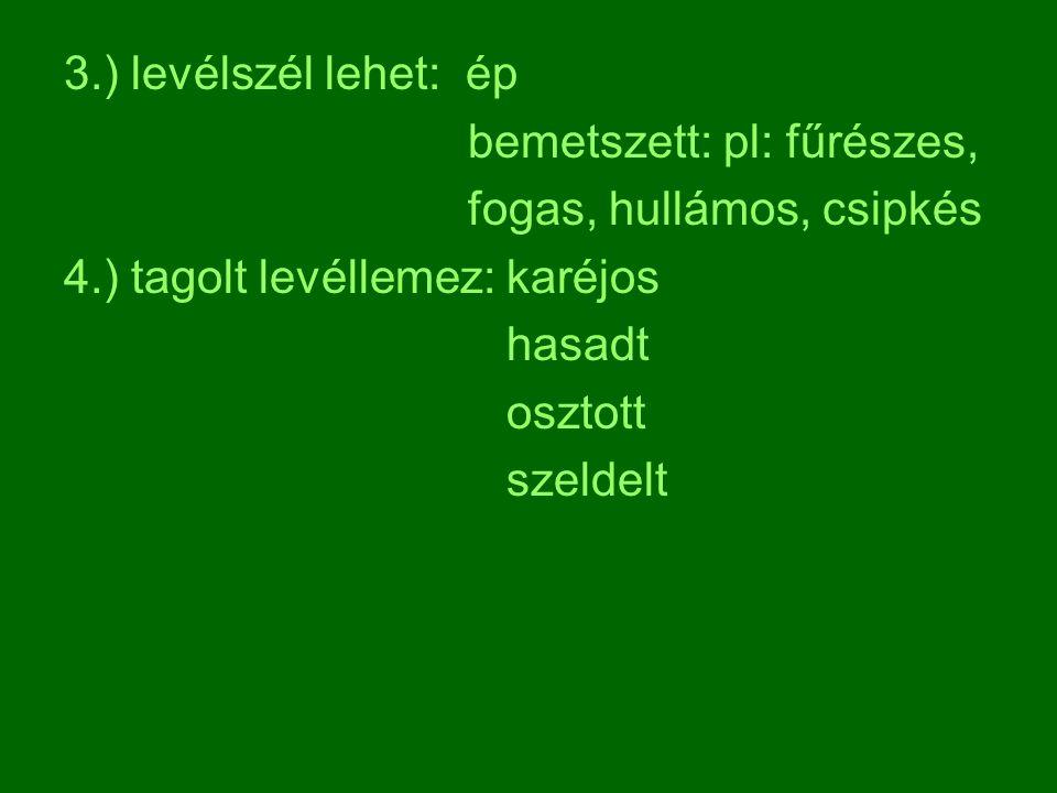V. Szöveti felépítése: