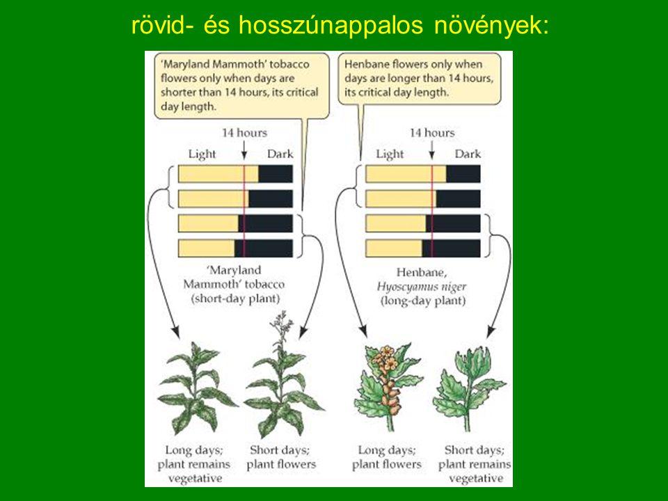 rövid- és hosszúnappalos növények: