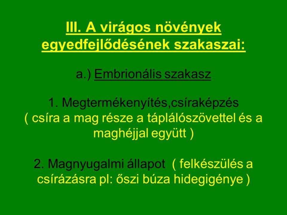 III.A virágos növények egyedfejlődésének szakaszai: a.) Embrionális szakasz 1.