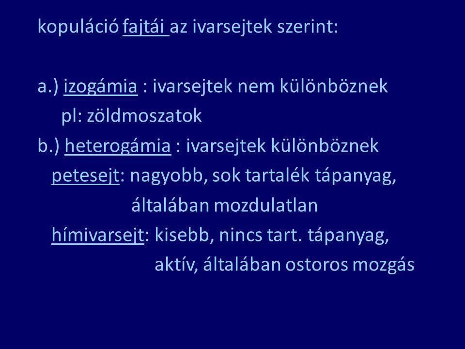 kopuláció fajtái az ivarsejtek szerint: a.) izogámia : ivarsejtek nem különböznek pl: zöldmoszatok b.) heterogámia : ivarsejtek különböznek petesejt: