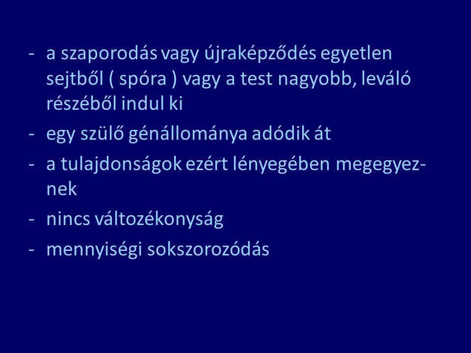 kopuláció fajtái az ivarsejtek szerint: a.) izogámia : ivarsejtek nem különböznek pl: zöldmoszatok b.) heterogámia : ivarsejtek különböznek petesejt: nagyobb, sok tartalék tápanyag, általában mozdulatlan hímivarsejt: kisebb, nincs tart.