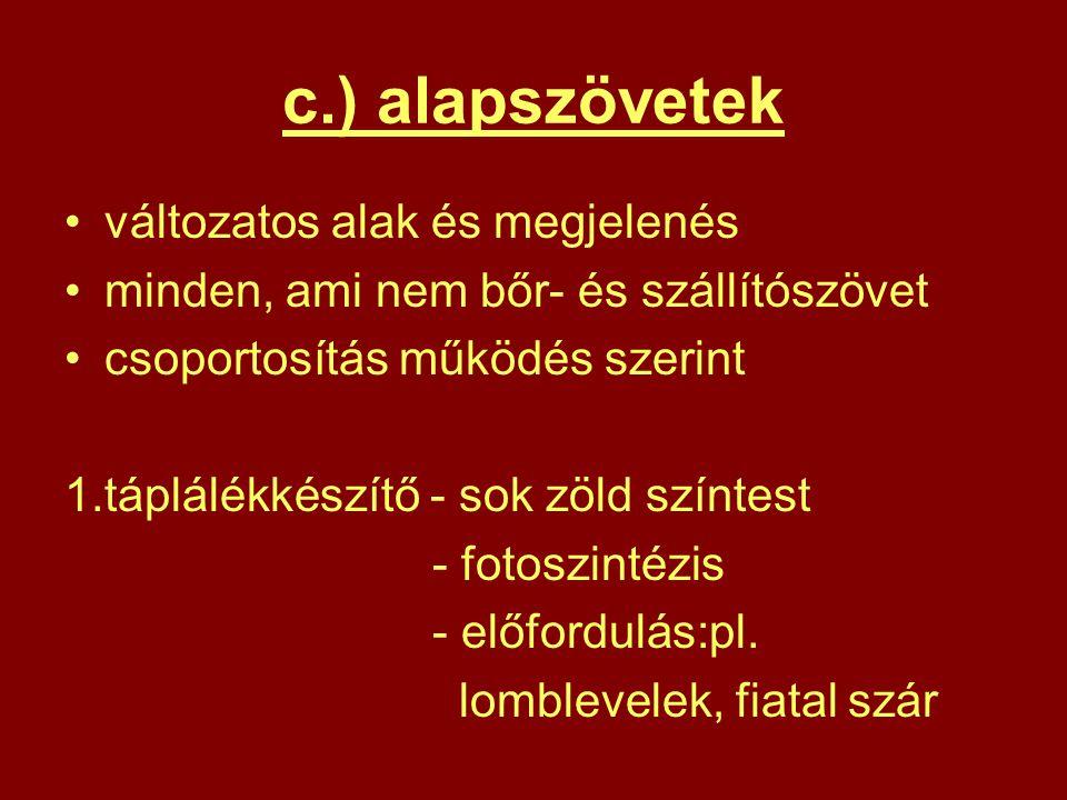 c.) alapszövetek változatos alak és megjelenés minden, ami nem bőr- és szállítószövet csoportosítás működés szerint 1.táplálékkészítő - sok zöld színt