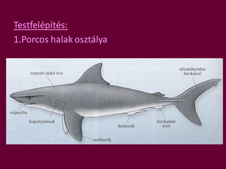 2. Csontos halak osztálya