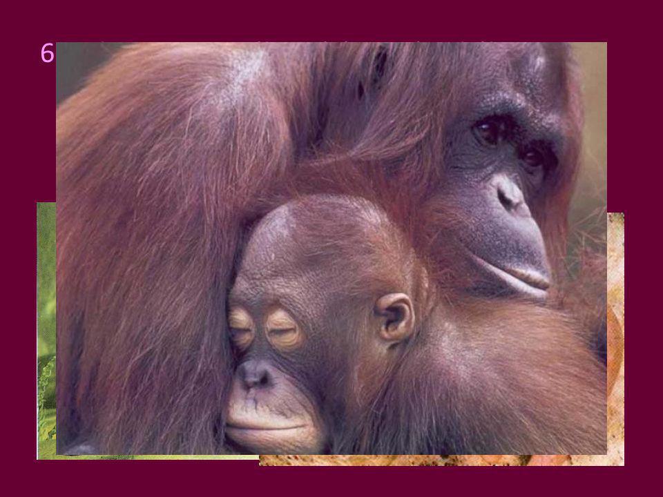 6. Belső megtermékenyítés, tojásrakók, erszényesek, méhlepényesek lehetnek elevenszülés, anyatejes táplálás, ivadékgondozás változó