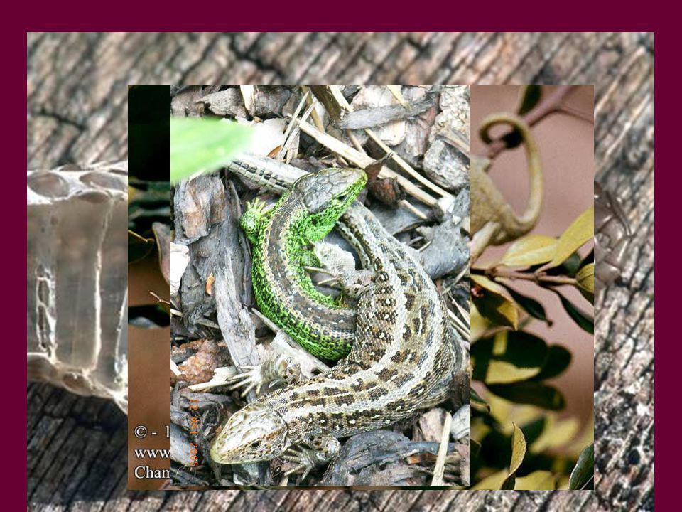 Hüllők: mocsári teknős, nílusi krokodil, fürge gyík, zöld gyík, vízisikló, közönséges kaméleon, keresztes vipera