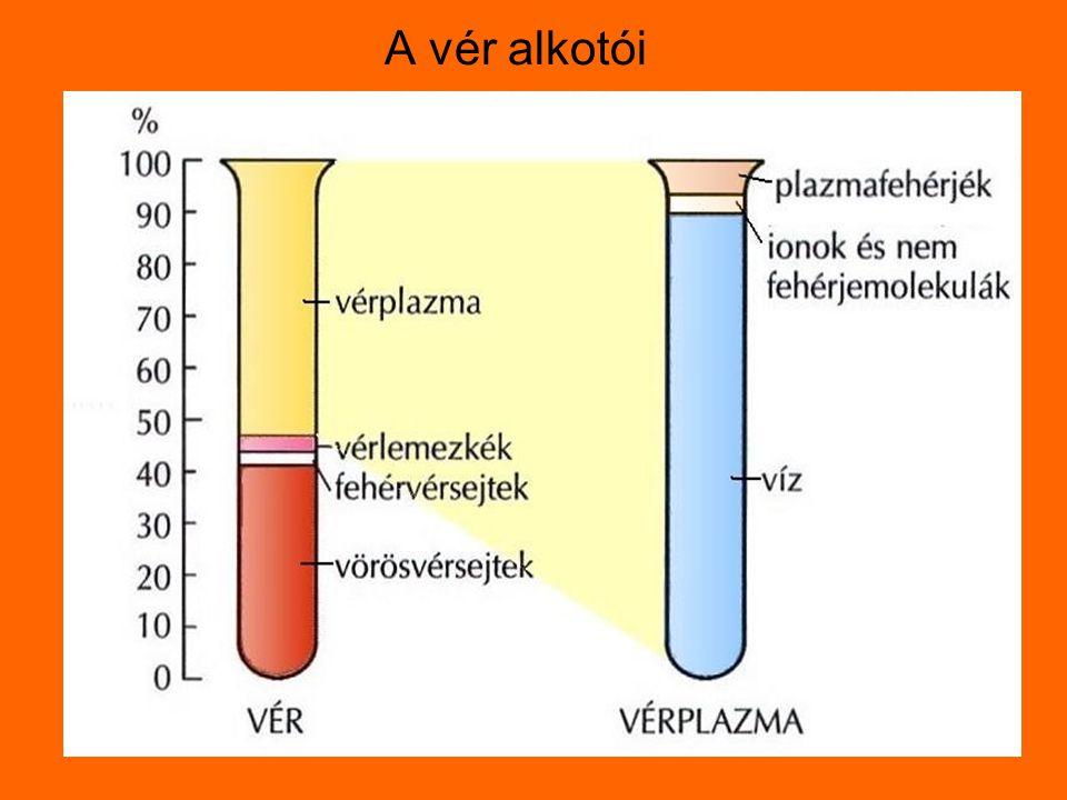 vörösvérsejtfehérvérsejtvérlemezkék Számuk 1mm3-ben 4-5 millió6-8000150-300ezer szerepükGázszállítás hemoglobin Védekezés Faló-és nyiroksejtek véralvadás előfordulásukérrendszerÉrrendszeren kívül is érrendszer Keletkezés helye vöröscsontvelőv.Csontvelő nyirokrendszer v.csontvelő BetegségeiVérszegénységFehérvérűségVéralvadási élettartam120nap7-14nap10nap Sejtes elemek/44%