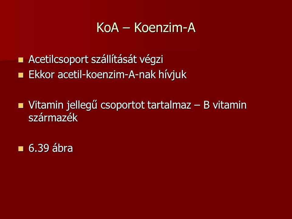 KoA – Koenzim-A Acetilcsoport szállítását végzi Acetilcsoport szállítását végzi Ekkor acetil-koenzim-A-nak hívjuk Ekkor acetil-koenzim-A-nak hívjuk Vi