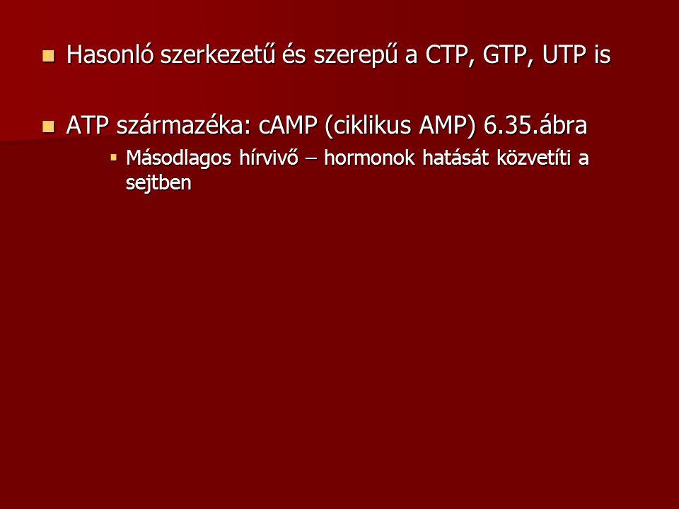Hasonló szerkezetű és szerepű a CTP, GTP, UTP is Hasonló szerkezetű és szerepű a CTP, GTP, UTP is ATP származéka: cAMP (ciklikus AMP) 6.35.ábra ATP sz