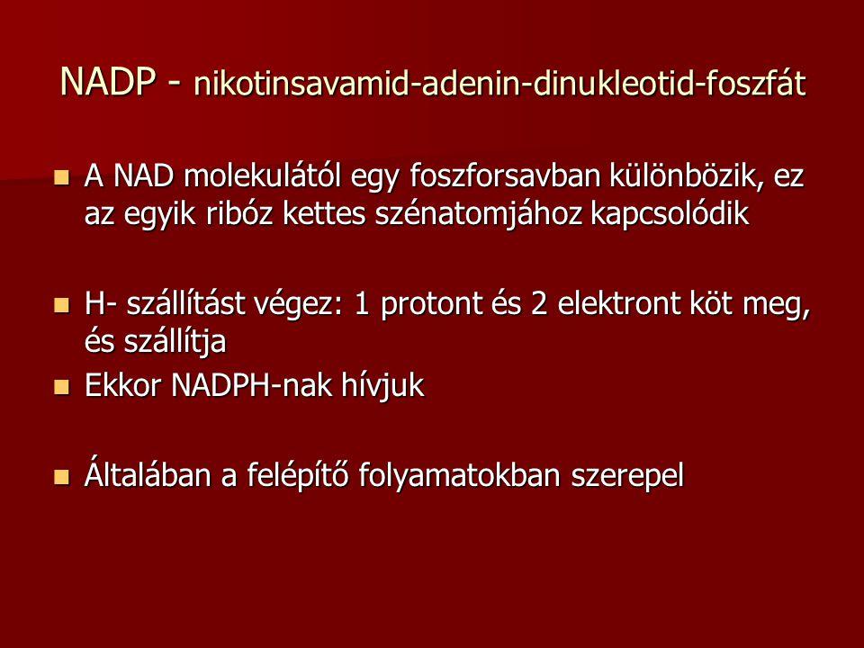 NADP - nikotinsavamid-adenin-dinukleotid-foszfát A NAD molekulától egy foszforsavban különbözik, ez az egyik ribóz kettes szénatomjához kapcsolódik A