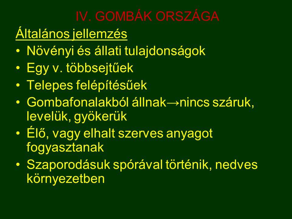 IV.GOMBÁK ORSZÁGA Általános jellemzés Növényi és állati tulajdonságok Egy v.