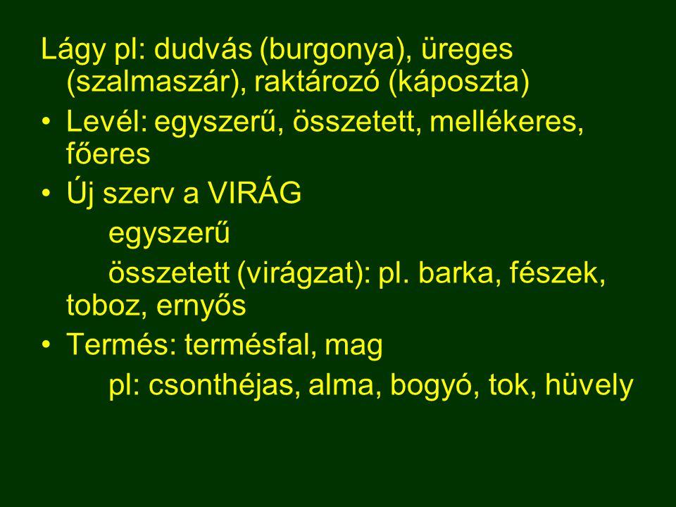 Lágy pl: dudvás (burgonya), üreges (szalmaszár), raktározó (káposzta) Levél: egyszerű, összetett, mellékeres, főeres Új szerv a VIRÁG egyszerű összetett (virágzat): pl.