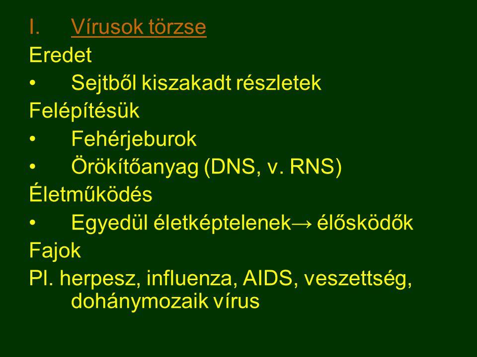 I.Vírusok törzse Eredet Sejtből kiszakadt részletek Felépítésük Fehérjeburok Örökítőanyag (DNS, v.