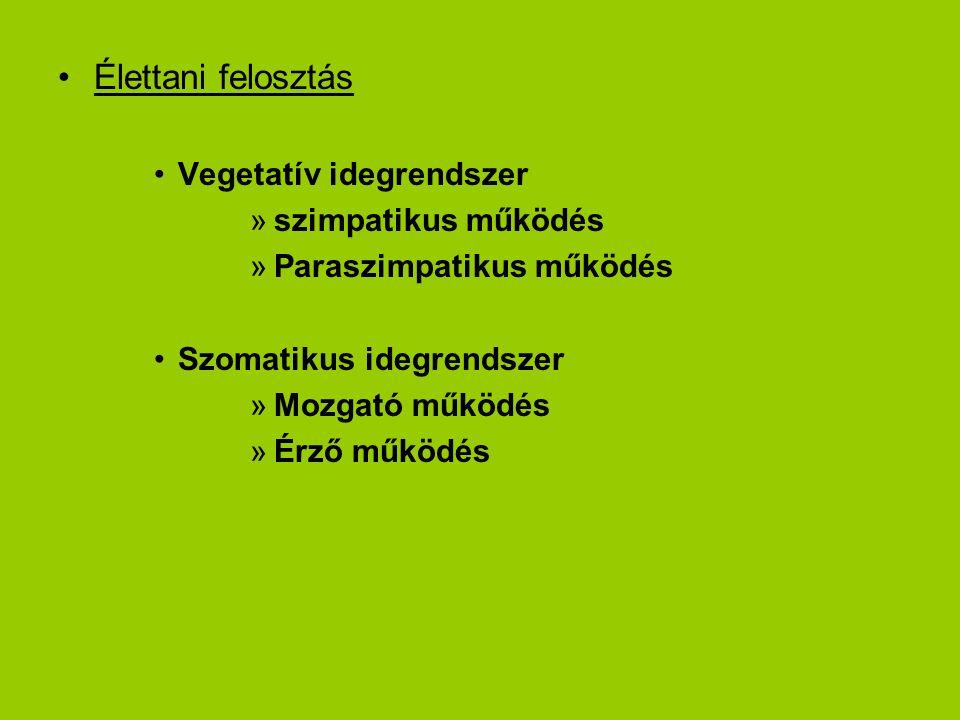 Élettani felosztás Vegetatív idegrendszer »szimpatikus működés »Paraszimpatikus működés Szomatikus idegrendszer »Mozgató működés »Érző működés