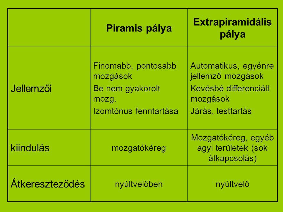 Piramis pálya Extrapiramidális pálya Jellemzői Finomabb, pontosabb mozgások Be nem gyakorolt mozg. Izomtónus fenntartása Automatikus, egyénre jellemző