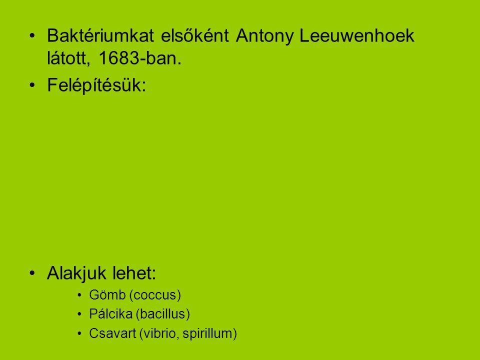 Baktériumkat elsőként Antony Leeuwenhoek látott, 1683-ban. Felépítésük: Alakjuk lehet: Gömb (coccus) Pálcika (bacillus) Csavart (vibrio, spirillum)