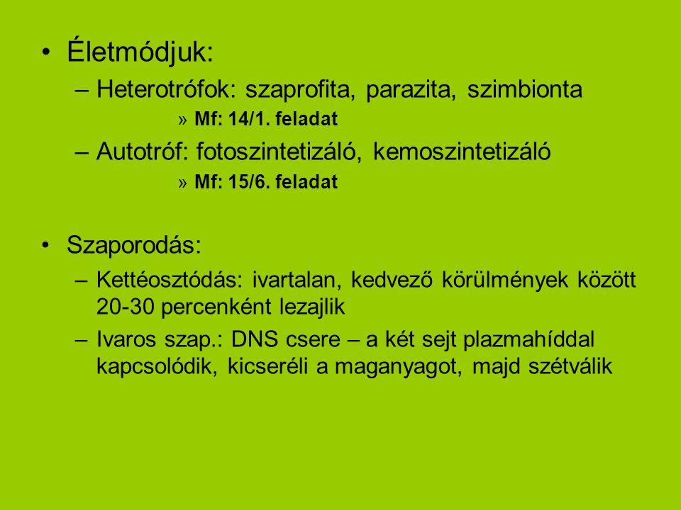 Életmódjuk: –Heterotrófok: szaprofita, parazita, szimbionta »Mf: 14/1. feladat –Autotróf: fotoszintetizáló, kemoszintetizáló »Mf: 15/6. feladat Szapor