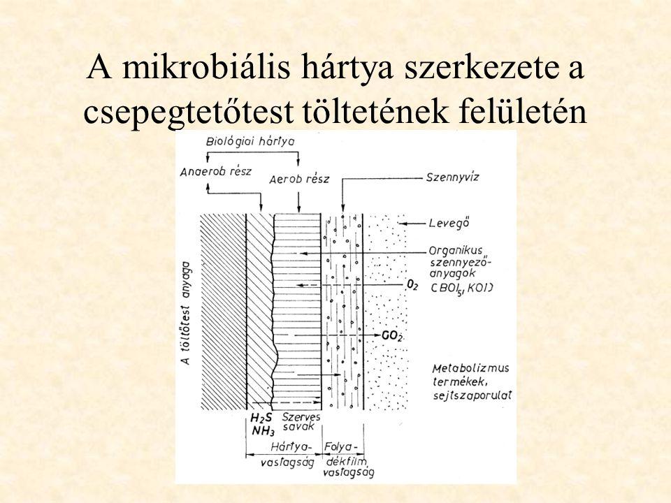 A mikrobiális hártya szerkezete a csepegtetőtest töltetének felületén