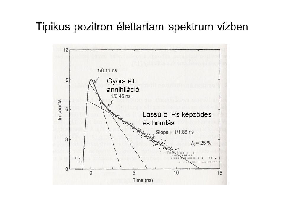 Tipikus pozitron élettartam spektrum vízben Gyors e+ annihiláció Lassú o_Ps képződés és bomlás