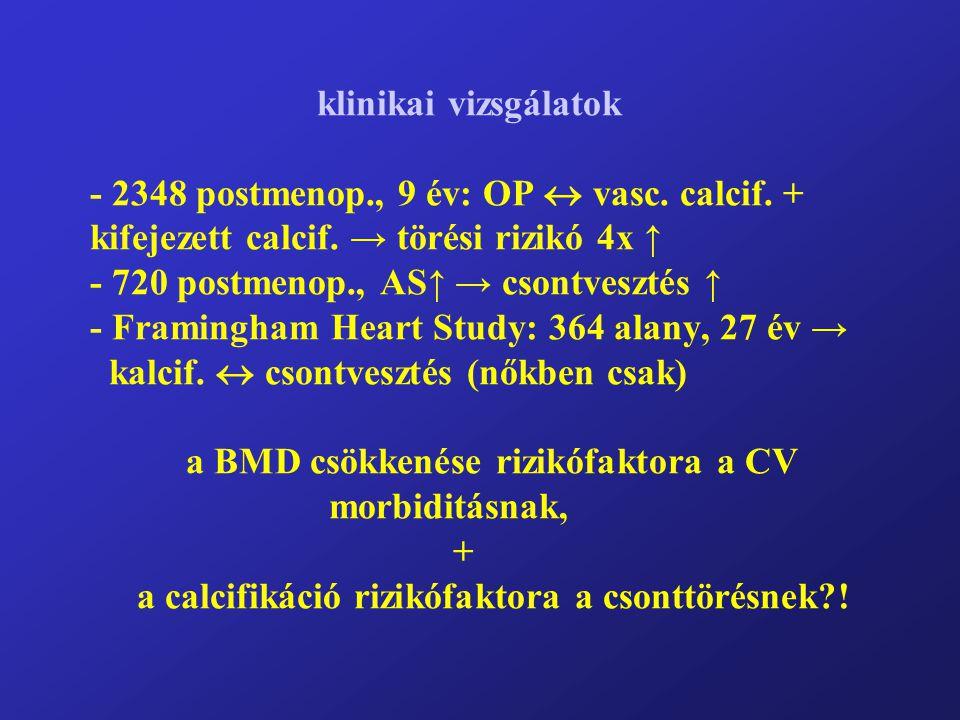 klinikai vizsgálatok - 2348 postmenop., 9 év: OP  vasc. calcif. + kifejezett calcif. → törési rizikó 4x ↑ - 720 postmenop., AS↑ → csontvesztés ↑ - Fr