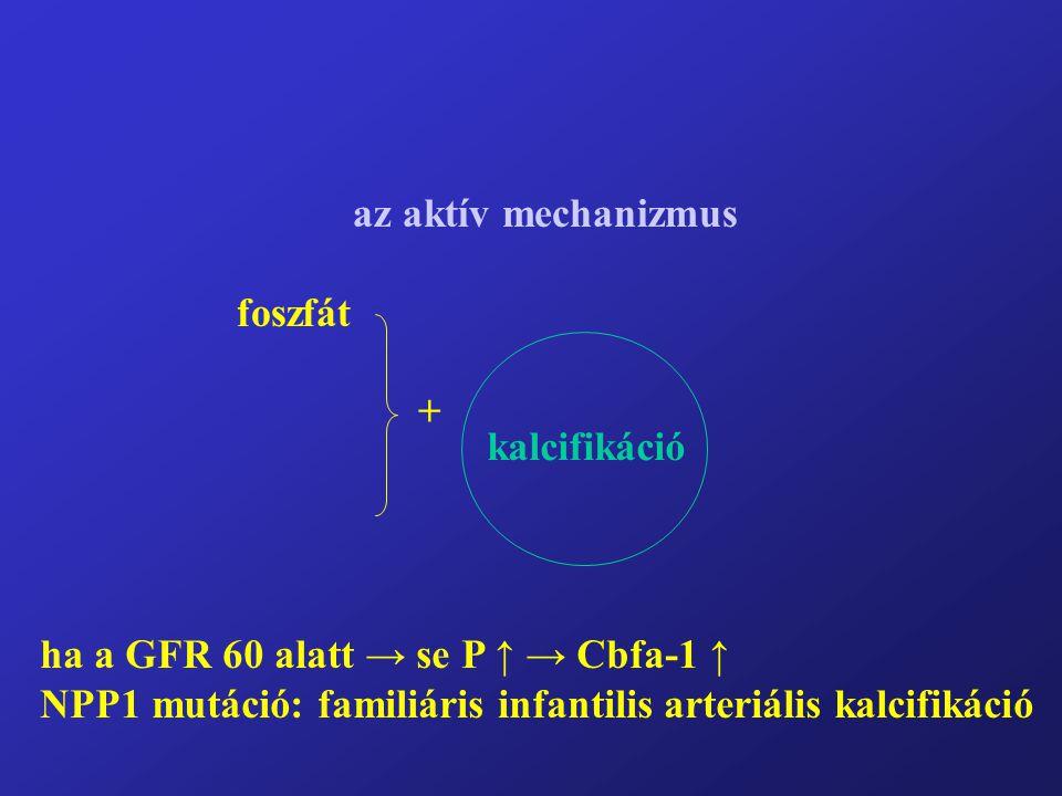 az aktív mechanizmus foszfát + kalcifikáció ha a GFR 60 alatt → se P ↑ → Cbfa-1 ↑ NPP1 mutáció: familiáris infantilis arteriális kalcifikáció