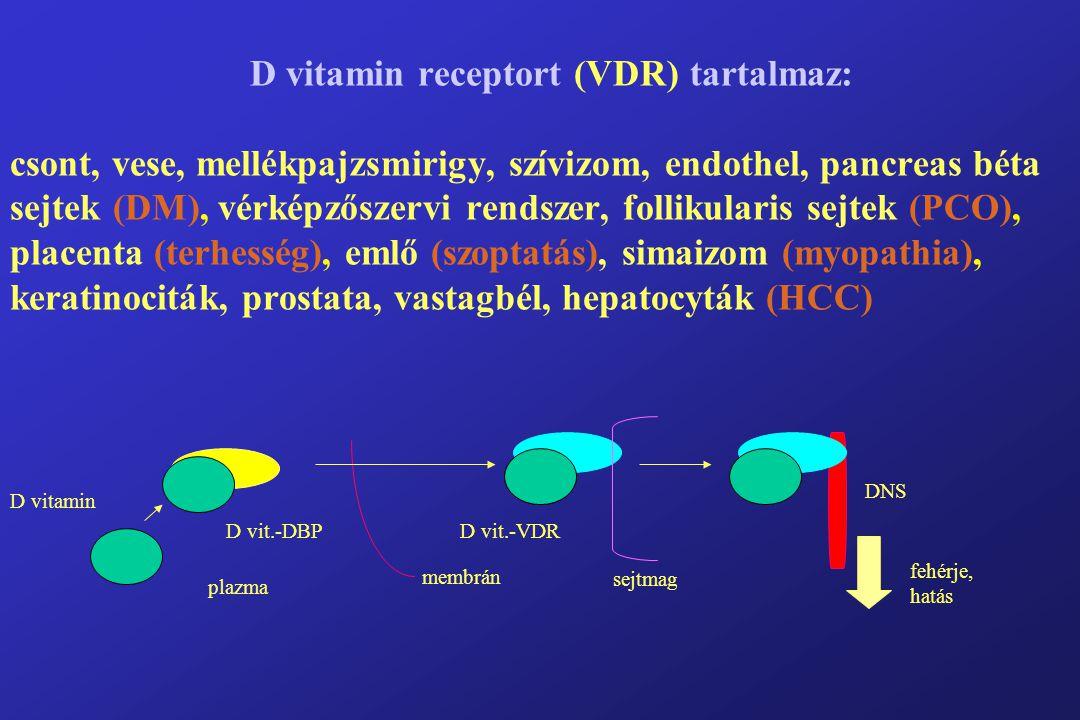 D vitamin receptort (VDR) tartalmaz: csont, vese, mellékpajzsmirigy, szívizom, endothel, pancreas béta sejtek (DM), vérképzőszervi rendszer, follikularis sejtek (PCO), placenta (terhesség), emlő (szoptatás), simaizom (myopathia), keratinociták, prostata, vastagbél, hepatocyták (HCC) D vitamin D vit.-DBP membrán sejtmag D vit.-VDR DNS fehérje, hatás plazma