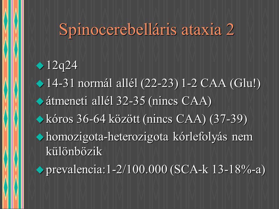 Spinocerebelláris ataxia 2 u 12q24 u 14-31 normál allél (22-23) 1-2 CAA (Glu!) u átmeneti allél 32-35 (nincs CAA) u kóros 36-64 között (nincs CAA) (37