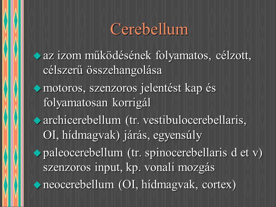 CerebellumCerebellum u az izom működésének folyamatos, célzott, célszerű összehangolása u motoros, szenzoros jelentést kap és folyamatosan korrigál u