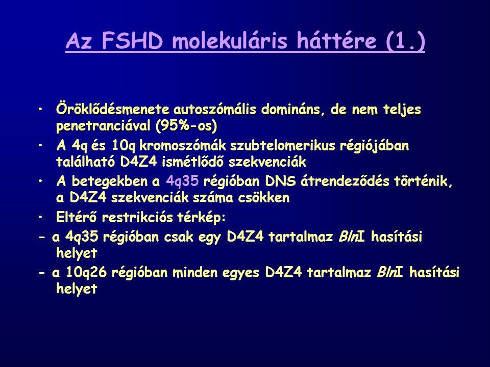 Az FSHD molekuláris háttére (1.) Öröklődésmenete autoszómális domináns, de nem teljes penetranciával (95%-os)Öröklődésmenete autoszómális domináns, de nem teljes penetranciával (95%-os) A 4q és 10q kromoszómák szubtelomerikus régiójában található D4Z4 ismétlődő szekvenciák A betegekben a 4q35 régióban DNS átrendeződés történik, a D4Z4 szekvenciák száma csökken Eltérő restrikciós térkép: - a 4q35 régióban csak egy D4Z4 tartalmaz BlnI hasítási helyet - a 10q26 régióban minden egyes D4Z4 tartalmaz BlnI hasítási helyet