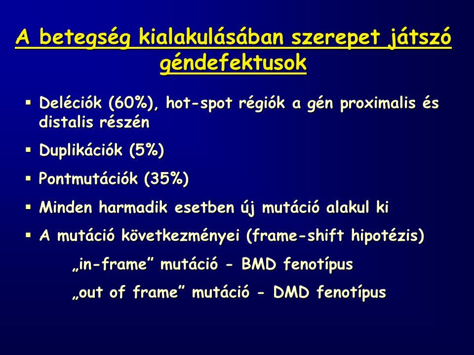 """ Deléciók (60%), hot-spot régiók a gén proximalis és distalis részén  Duplikációk (5%)  Pontmutációk (35%)  Minden harmadik esetben új mutáció alakul ki  A mutáció következményei (frame-shift hipotézis) """"in-frame mutáció - BMD fenotípus """"out of frame mutáció - DMD fenotípus A betegség kialakulásában szerepet játszó géndefektusok"""