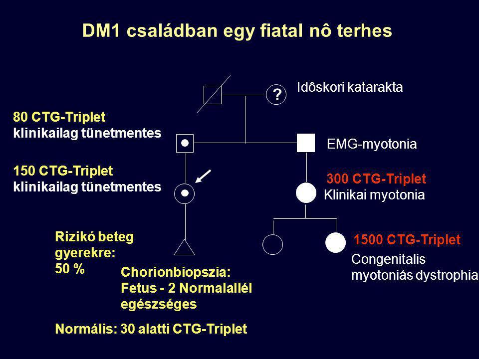 DM1 családban egy fiatal nô terhes Klinikai myotonia Congenitalis myotoniás dystrophia EMG-myotonia 1500 CTG-Triplet 300 CTG-Triplet 150 CTG-Triplet k