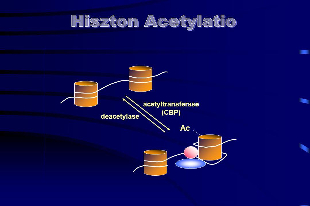 acetyltransferase (CBP) deacetylase Ac