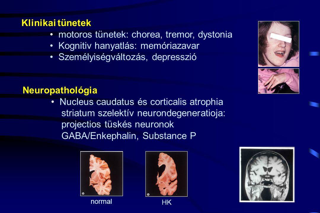 Klinikai tünetek motoros tünetek: chorea, tremor, dystonia Kognitiv hanyatlás: memóriazavar Személyiségváltozás, depresszió Neuropathológia Nucleus caudatus és corticalis atrophia striatum szelektív neurondegeneratioja: projectios tüskés neuronok GABA/Enkephalin, Substance P normal HK