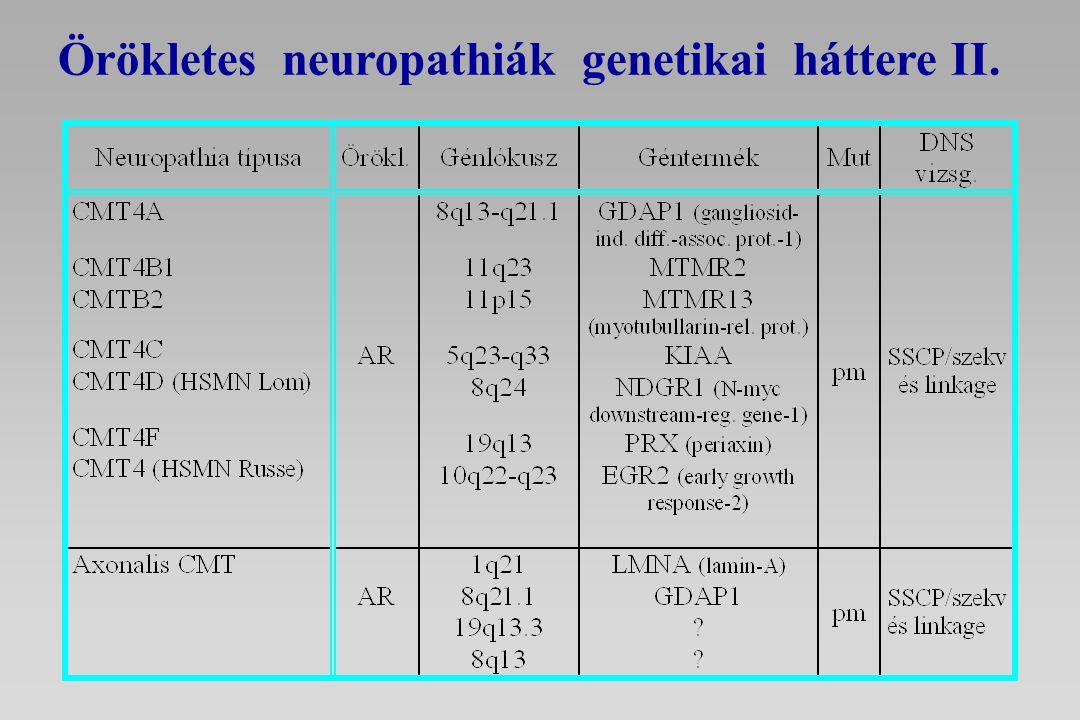 CMT1A Periferiás Myelin Protein 22 (PMP22), compact myelin * gén duplikáció (1.5 Mb tandem repeat): 75% funkció-nyeréses mutációk (gén dózis hatás) * domináns pontmutációk (>40): 25% funkció-nyeréses mutációk (domináns-negatív hatás) CMT1BMyelin Protein Zero (P0) pontmutációi (>80 ) compact myelin, funkció-vesztéses, ill.