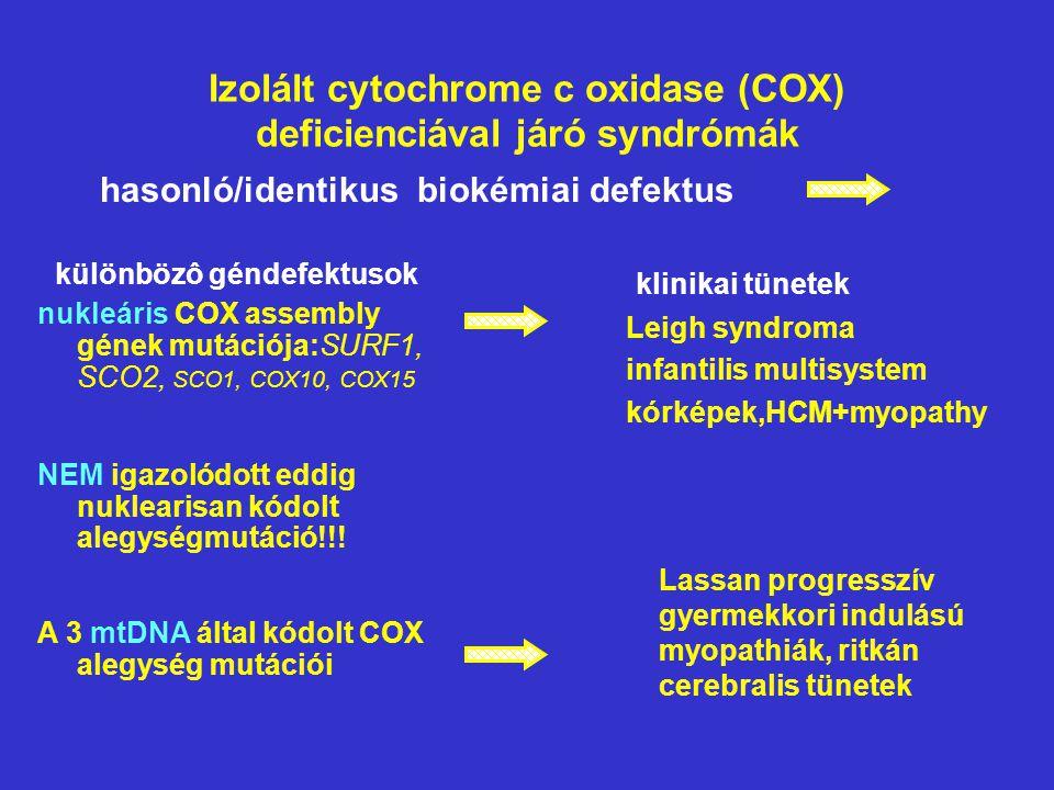 Izolált cytochrome c oxidase (COX) deficienciával járó syndrómák klinikai tünetek Leigh syndroma infantilis multisystem kórképek,HCM+myopathy Lassan p