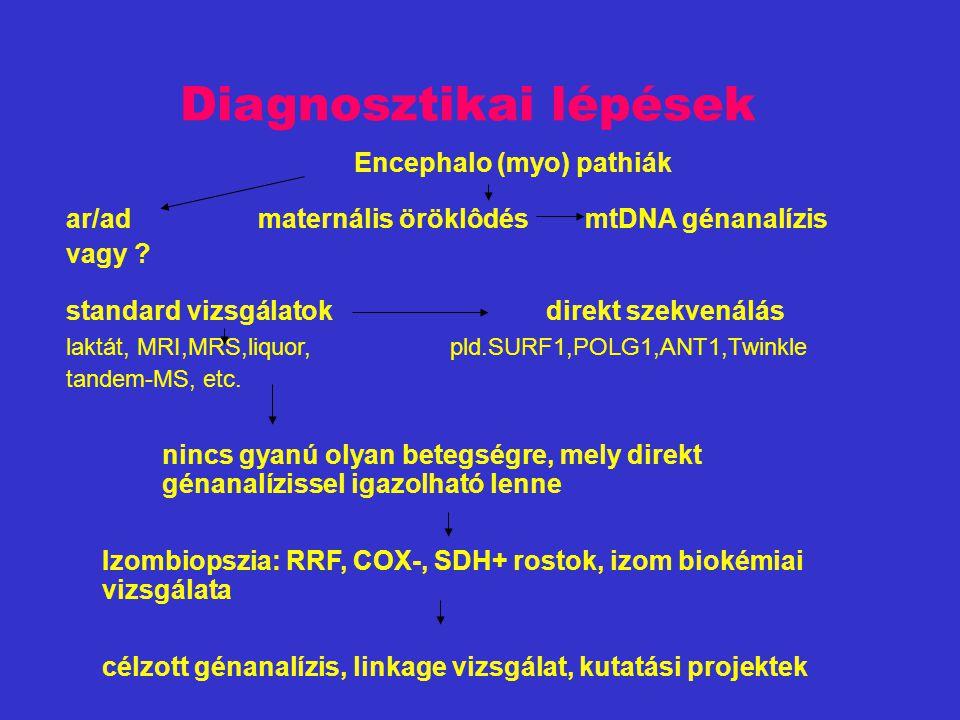 Diagnosztikai lépések Encephalo (myo) pathiák ar/admaternális öröklôdés mtDNA génanalízis vagy .