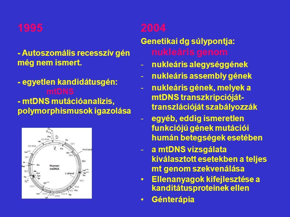 2004 Genetikai dg súlypontja: nukleáris genom -nukleáris alegységgének -nukleáris assembly gének -nukleáris gének, melyek a mtDNS transzkripcióját- transzlációját szabályozzák -egyéb, eddig ismeretlen funkciójú gének mutációi humán betegségek esetében -a mtDNS vizsgálata kiválasztott esetekben a teljes mt genom szekvenálása Ellenanyagok kifejlesztése a kanditátusproteinek ellen Génterápia 1995 - Autoszomális recesszív gén még nem ismert.