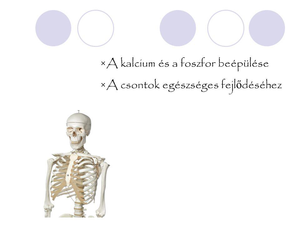 ×A kalcium és a foszfor beépülése ×A csontok egészséges fejl ő déséhez
