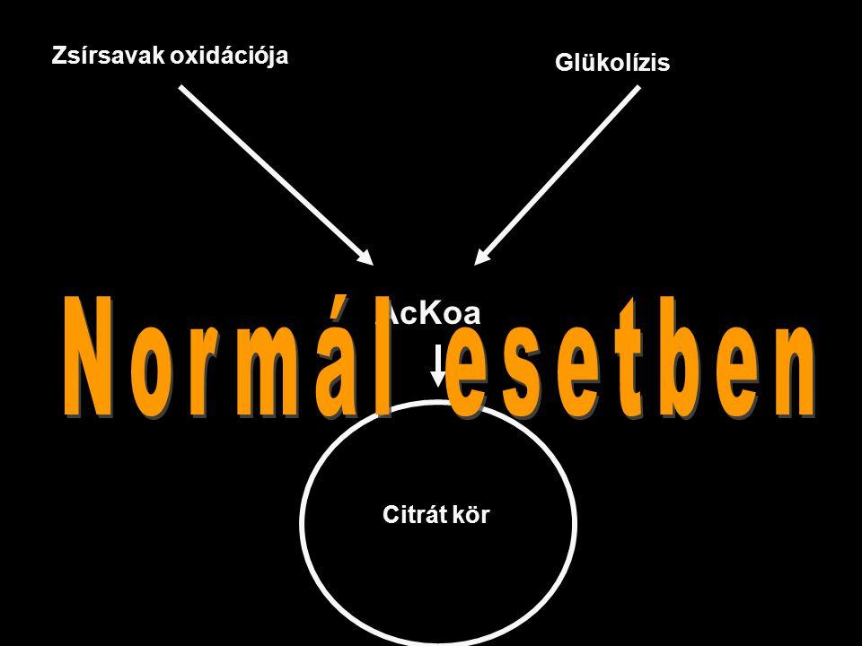Zsírsavak oxidációja AcKoa Glükolízis Citrát kör