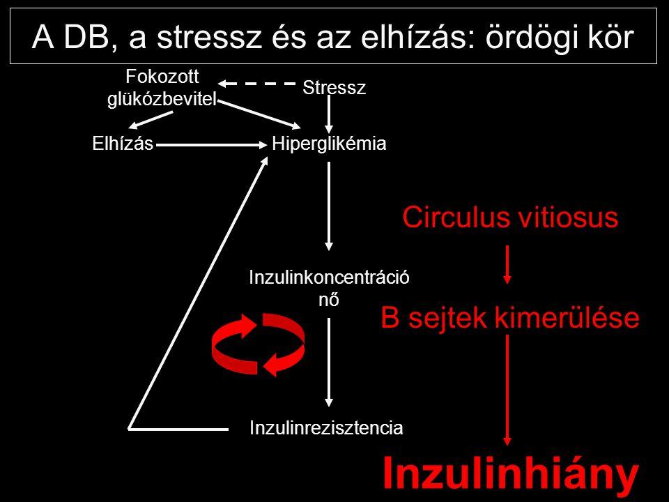 A DB, a stressz és az elhízás: ördögi kör Hiperglikémia Fokozott glükózbevitel Elhízás Inzulinkoncentráció nő Inzulinrezisztencia Circulus vitiosus B