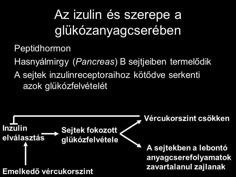 Az izulin és szerepe a glükózanyagcserében Peptidhormon Hasnyálmirgy (Pancreas) B sejtjeiben termelődik A sejtek inzulinreceptoraihoz kötődve serkenti