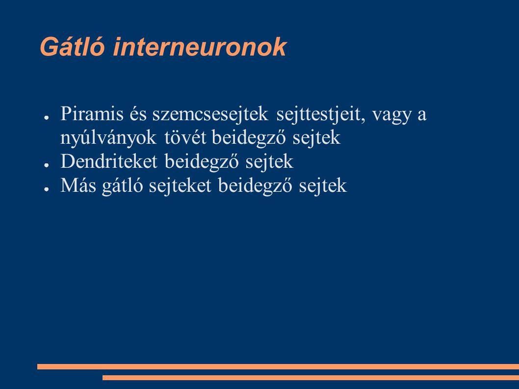 Gátló interneuronok ●P●Piramis és szemcsesejtek sejttestjeit, vagy a nyúlványok tövét beidegző sejtek ●D●Dendriteket beidegző sejtek ●M●Más gátló sejt