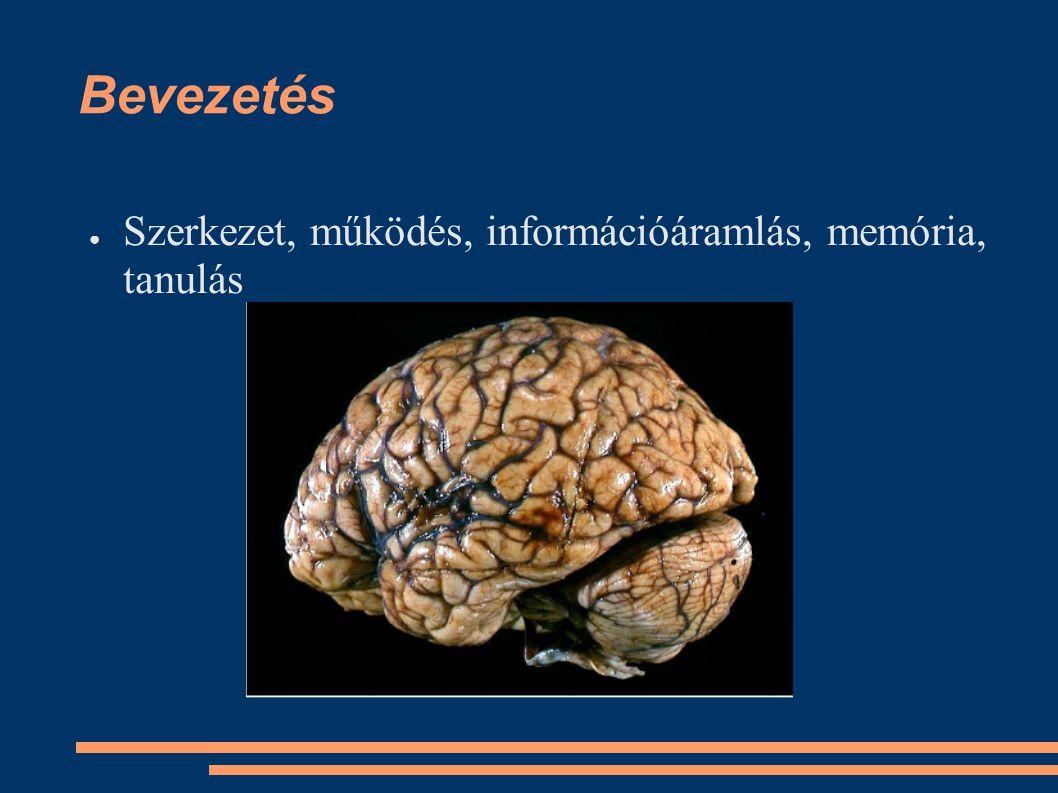 Bevezetés ●S●Szerkezet, működés, információáramlás, memória, tanulás