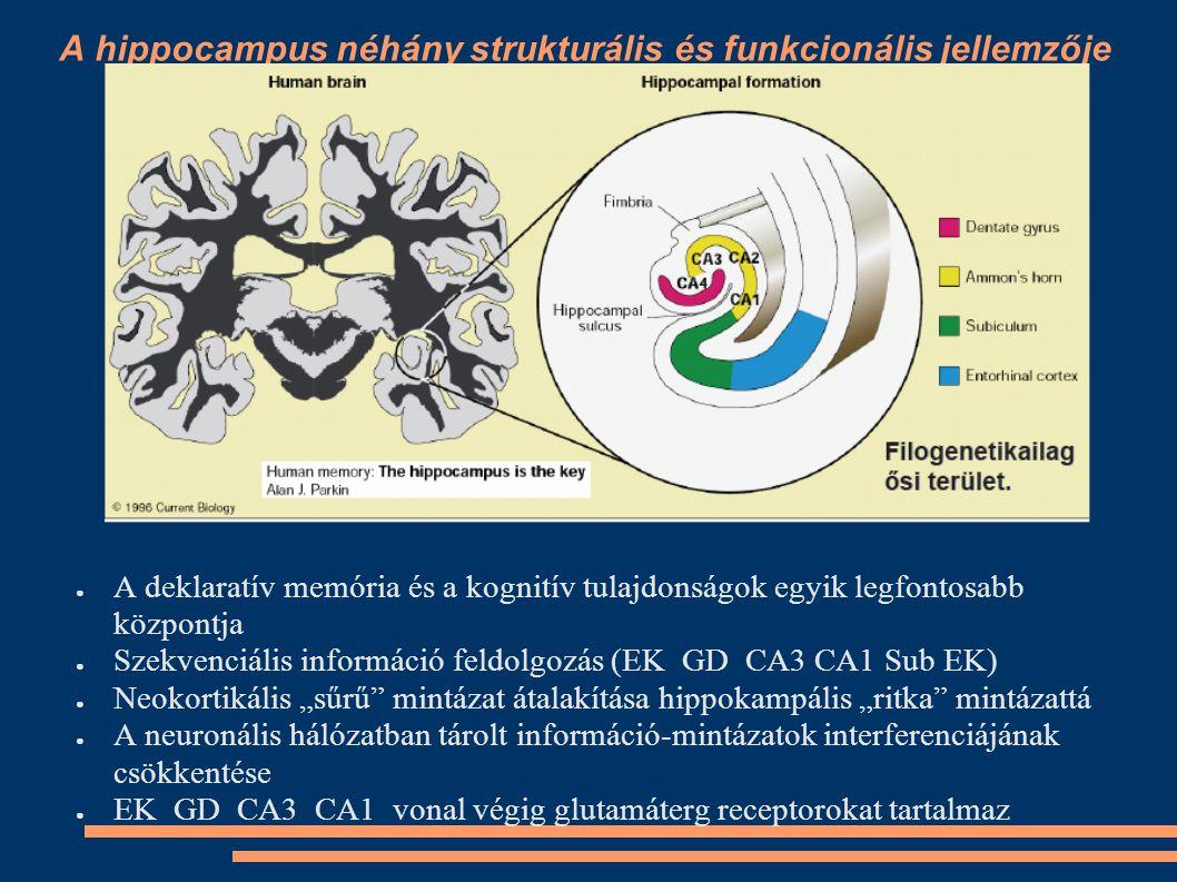 A hippocampus jellemzői ●M●Más kéregrésszel nem pótolható ●S●Speciális egyszerű szerkezetű kéregrész (archikortex) ●M●Miért egy ilyen egyszerű szerkezetű agyterület szabályozza az egyik legmagasabb rendű funkciót pl.