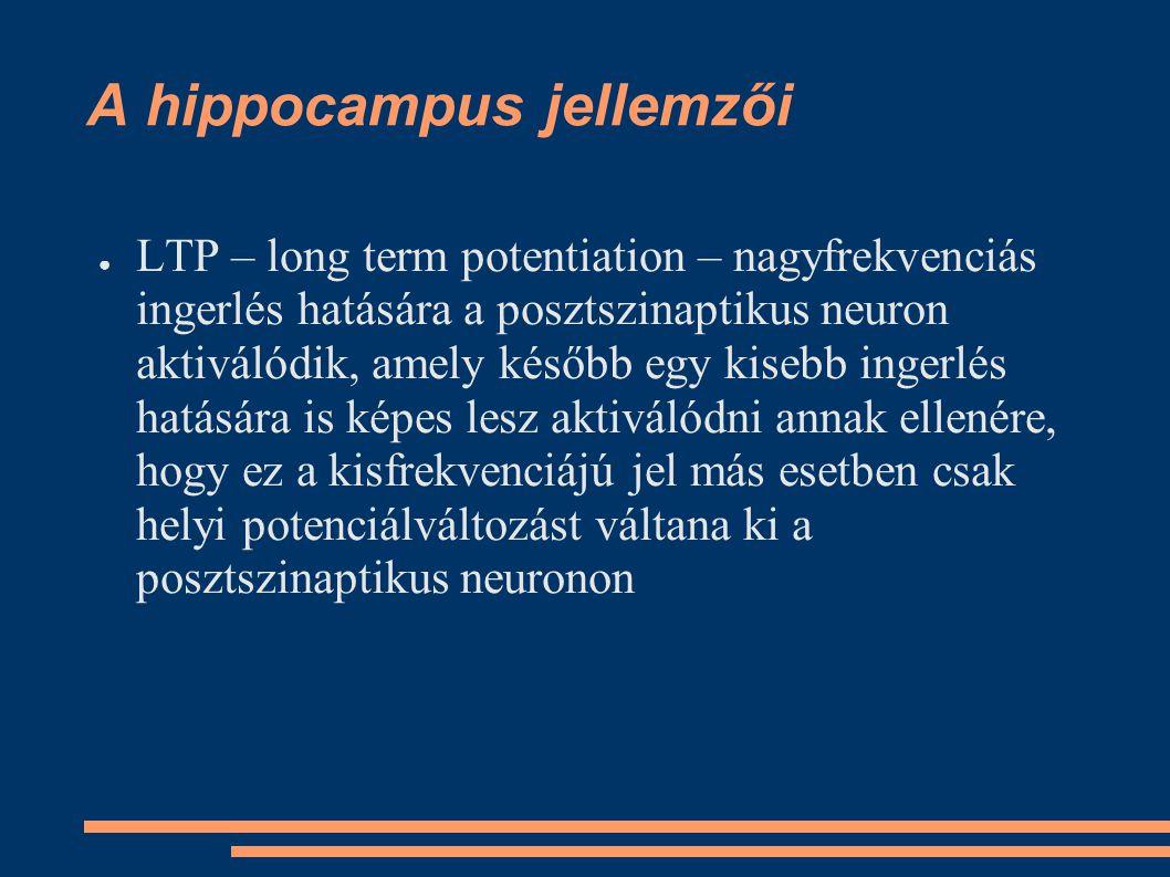 ● LTP – long term potentiation – nagyfrekvenciás ingerlés hatására a posztszinaptikus neuron aktiválódik, amely később egy kisebb ingerlés hatására is