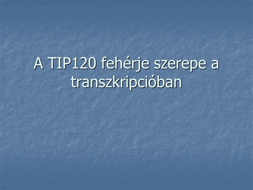 A TIP120 fehérje szerepe a transzkripcióban