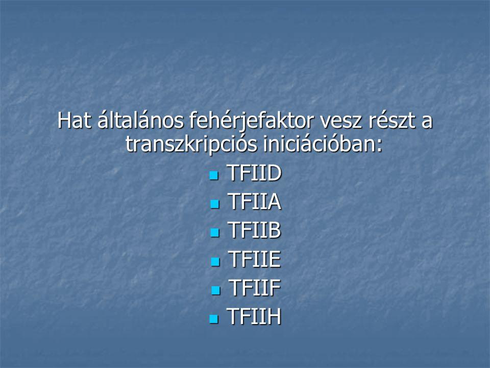 Transzkripciós iniciációs komplex TFIID TATA-box TFIIA TFIIB Polimeráz II TFIIF