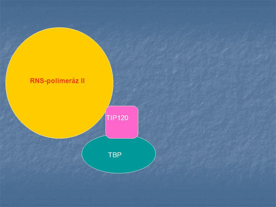 A PCR reakció stratégiája T-DNS LB21 H911BH911A5'3'