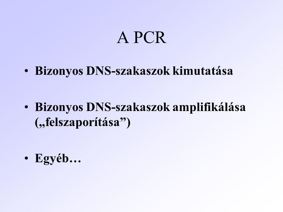"""A PCR Bizonyos DNS-szakaszok kimutatása Bizonyos DNS-szakaszok amplifikálása (""""felszaporítása"""") Egyéb…"""